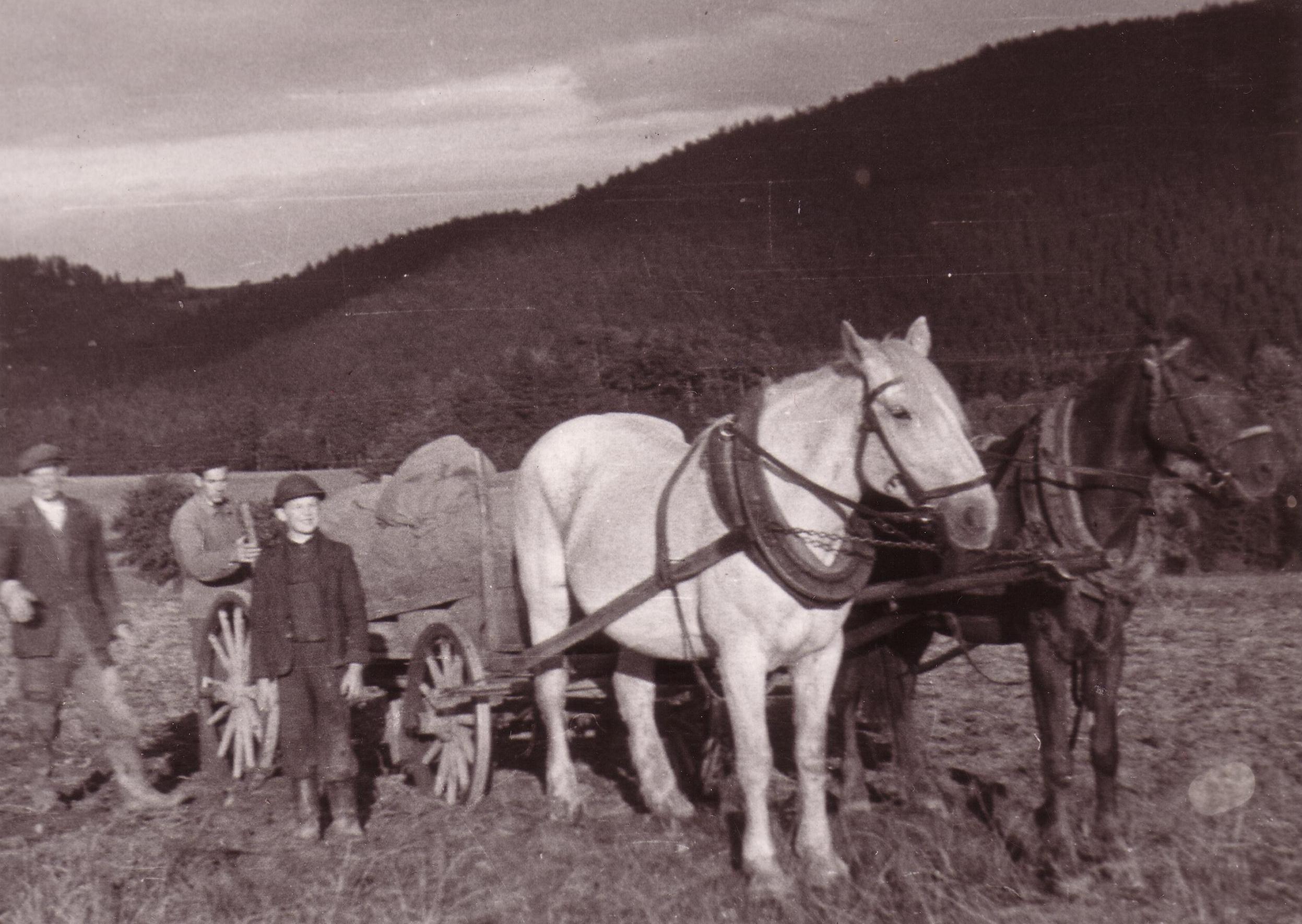 Koně na poli